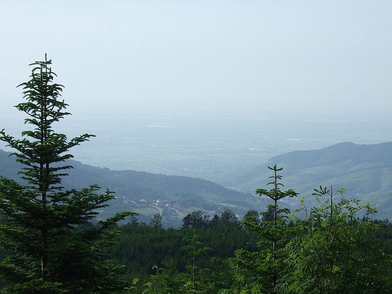 the-black-forest-schwarzwald.jpg